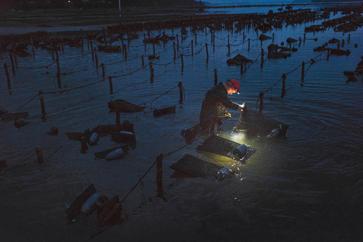 タンブル・ファームの早朝のシフトで働くコーリー・ローガン。潮とともに上下する浸透性のバッグのなかで牡蠣を養殖するこの方法は、殻をより深くし、風味を鋭くする。写真:Garrett Grove