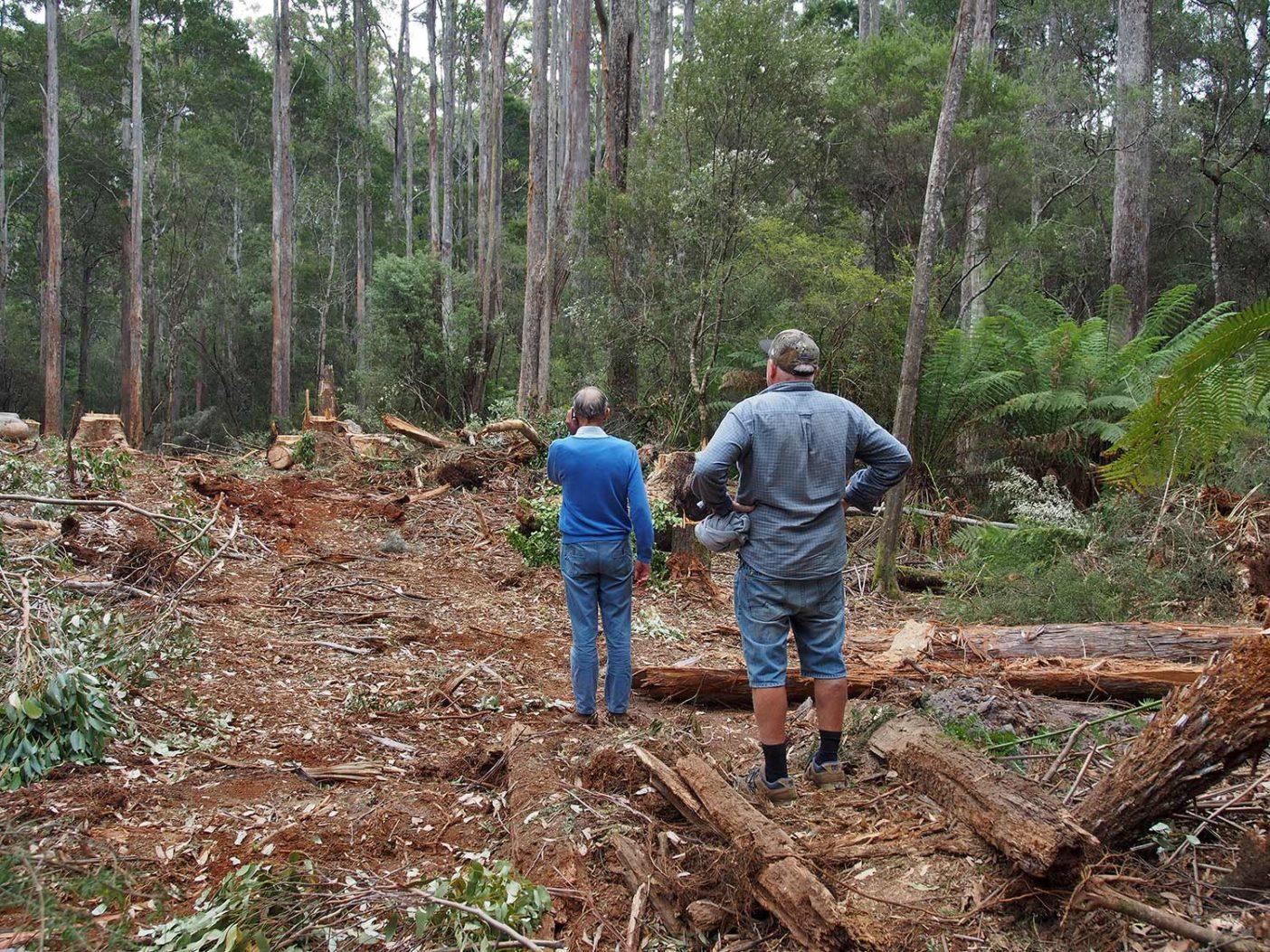 2016年1月に逮捕される直前にタスマニアのラポインヤ森林の皆伐区域を視察する著名なオーストラリアの環境保護主義者ボブ・ブラウン博士。写真:Bob Brown Foundation
