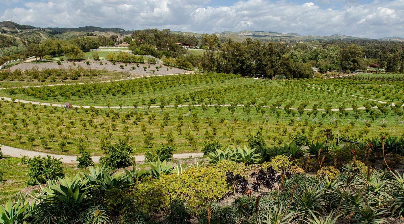 アプリコット・レーン・ファームは多種の果物、野菜、動物を育てる有機認定済みのバイオダイナミック農場。カリフォルニア州モーアパーク。 Photo: Keri Oberly