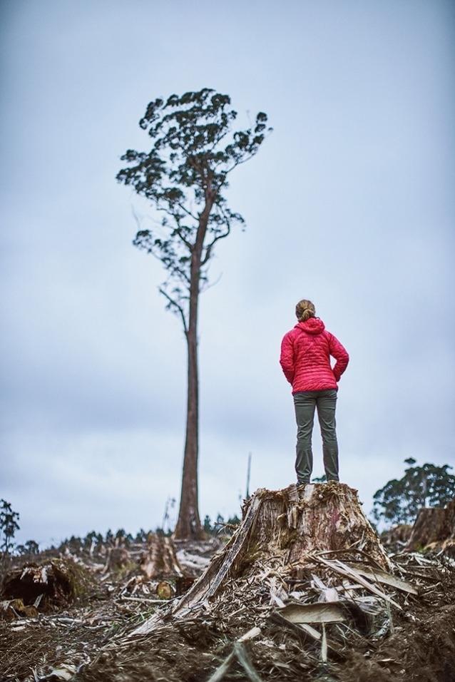 最近皆伐された森にわずか1本残されたユーカリの木の前に立つニコール・アンダーソン。Photo: Mikey Schaefer