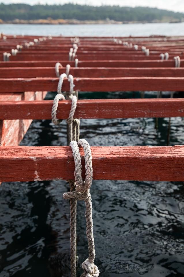 ロープを赤い木製の梁に縛り付けて、海の中へ入れる。