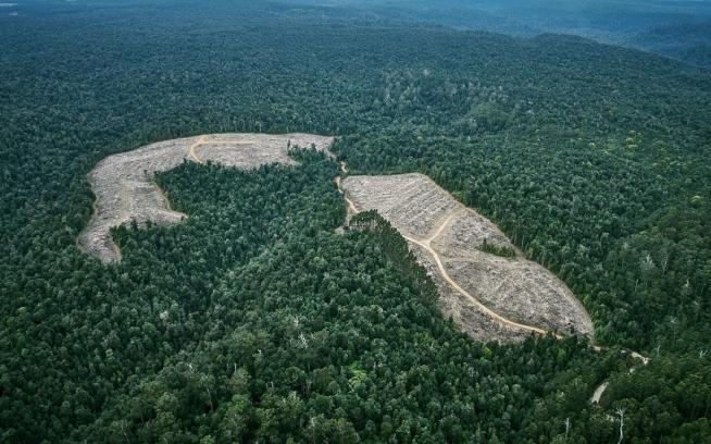 「円柱に使いたいのは見つけることのできるいちばん大きな山にあるいちばん大きな木だ。僕らのサーカスのメインのテントの支柱のような。それはその山で伐採される最後の1本で、他を皆伐したあとに残される最後の木だ」 —ケン・キージー、『わが緑の大地(邦題)』Photo:Mikey Schaefer
