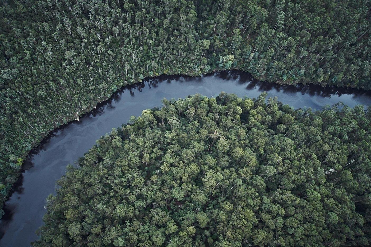 タスマニアの北西部にあるターカイン地域は世界で最後の手つかずのゴンドワナ多雨林のひとつがある場所だ。Photo: Mikey Schaefer