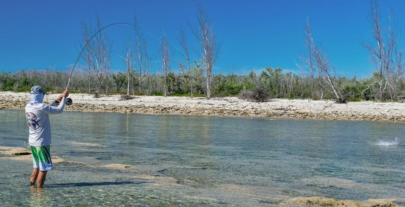わずか数インチ(5~6センチ)の透明な水の中で餌をとるボーンフィッシュと繋がるアーロン・アダムズ博士。グランド バハマ島。Photo: Justin Lewis