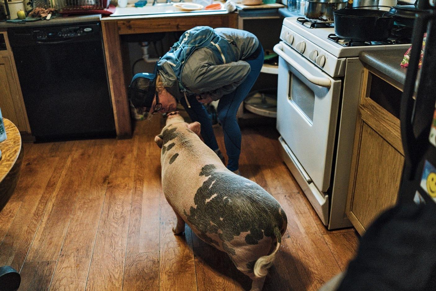 ランニング前のアイビーに幸運のキスをしてあげる巻き尾のシンバ。この豚も自分のStrava(ランナーやサイクリストのためのソーシャルネットワーク)のアカウントをもっている。Photo: Steven Gnam
