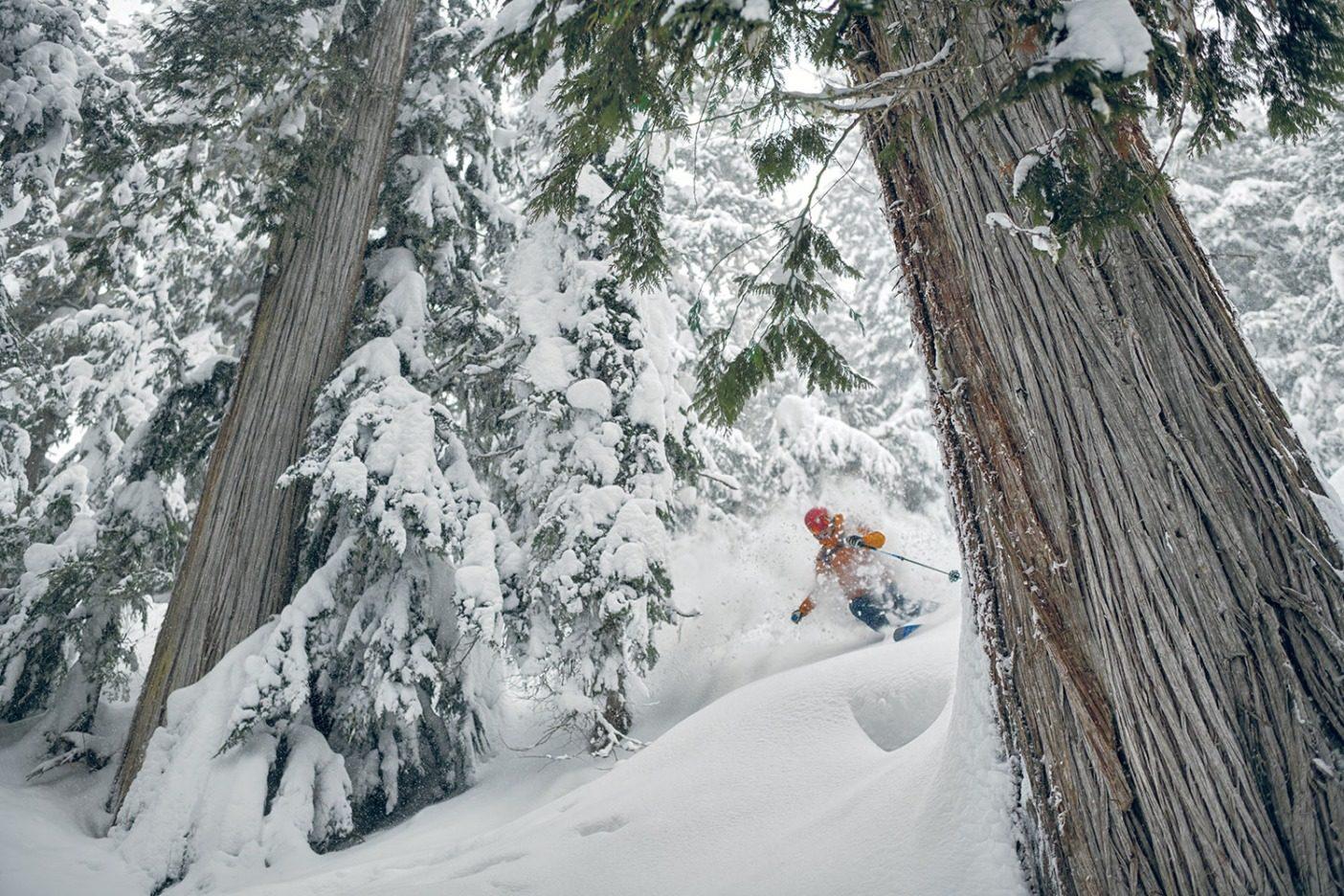 スギの老齢樹のあいだをターンしながら巧みなポーズを決めるエヴァンス。樹齢120 〜250 年というこれらの老木のなかでスキーをすることは、積雪の標高が上がりつづけるブリティッシュ・コロンビアでは稀になっている。 Photo: Garrett Grove