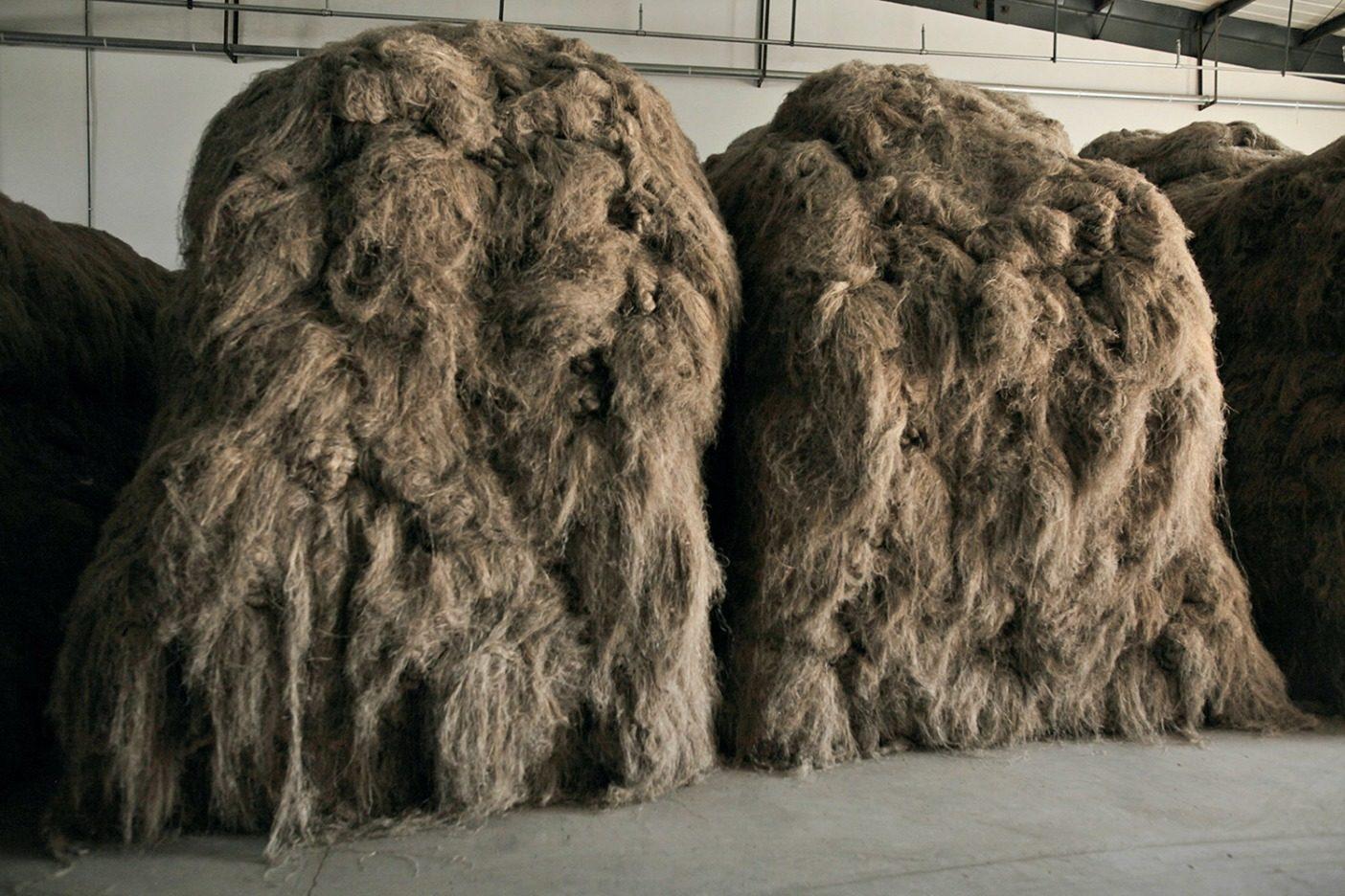 外側の繊維を剥がしていくと、髪の毛のような繊維になる。農家の人たちが繊維を辺りに放り投げて、中央で束ねてウィッグのような束を作る。そして、各束の結び目を掴んで持ち上げ、投げながら積み重ねていく。この時点で、繊維は剛毛な馬の毛のような感触になる。 Photo: Lloyd Belcher