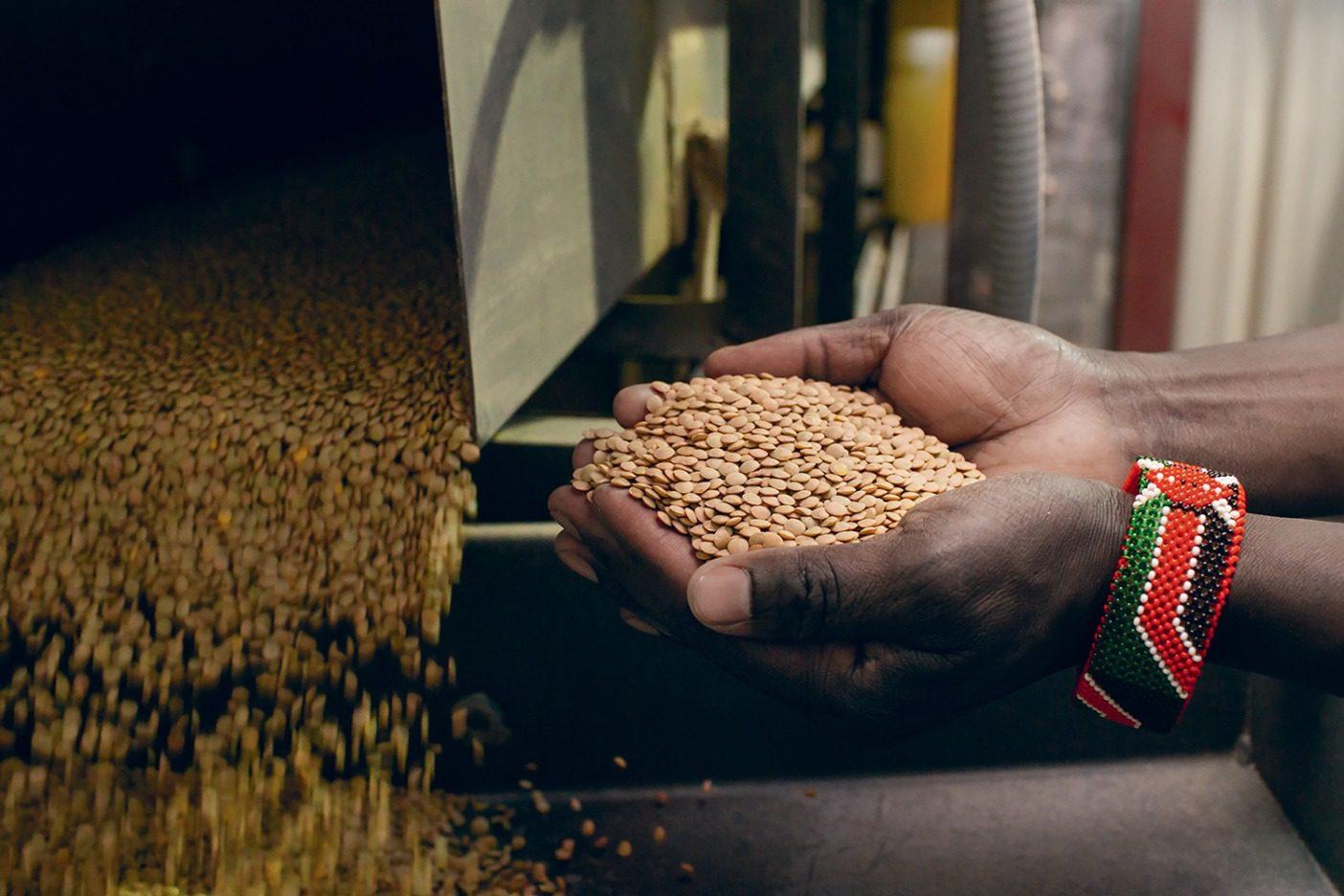 〈タイムレス・シーズ〉で洗浄されたオーガニックレンズ豆を両手いっぱいにすくう、農学者のジョセフ・キビウォット。 Photo: Amy Kumler