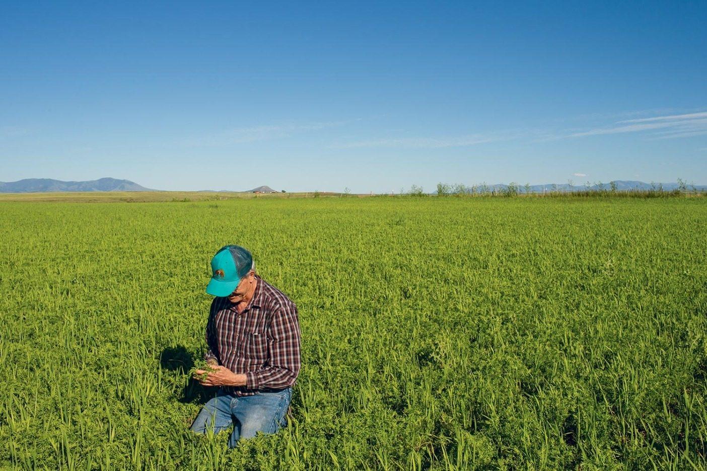 ニック・メムキーの畑でレンズ豆を観察する〈タイムレス・シーズ〉の共同創業者デイヴ・オイエン。ニックの農場は「ビッグスカイ・カントリー」ことモンタナで〈タイムレス〉が支援する、十数の家族経営オーガニック農場のひとつ。 Photo: Amy Kumler