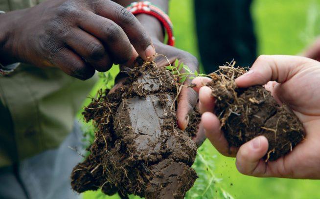 レンズ豆の根粒の検査をする、モンタナを拠点とする〈タイムレス・シーズ〉のジョセフ・キビウォットとジム・バーングローバー。根粒は窒素の固定を示すもので、植物の成長を助けて土壌を肥やす。  Photo: Amy Kumler