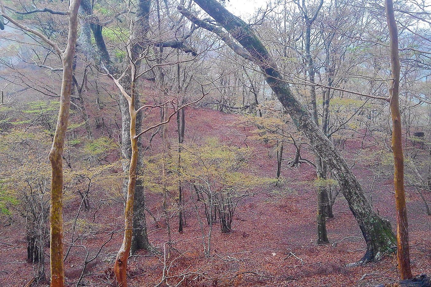 台高山脈は静かな森の中を行く