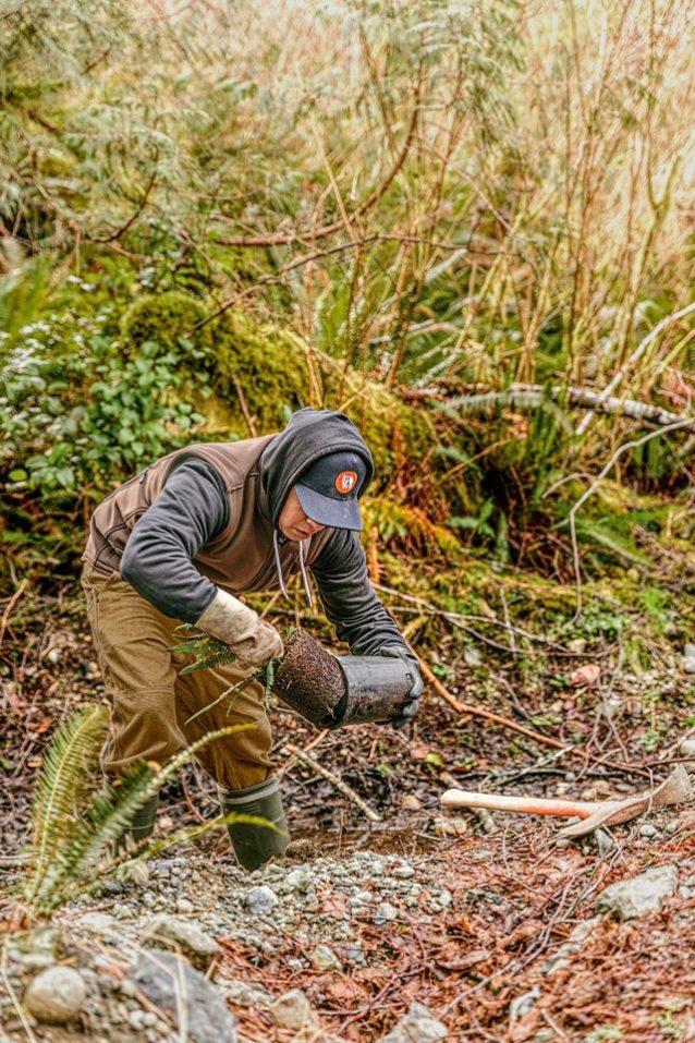 自生の北米シダを川岸に植えるファースト・ネイションズのトラオ・キ・アットのメンバー兼フィールド技術者のジーン・アントワン。自生の低木層植物を再導入することで、川岸が安定し、水質が向上し、生息地の複雑性が高まることとなる。Photo: Jeremy Koreski