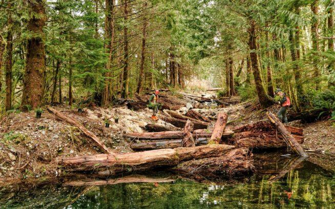 〈CWFS〉はこの放棄された林道を、地下水に支えられたオフチャンネル生息地に変換した。冬の降雨の際、サーモンとトラウトの稚魚がここで避難しているのが見られる。エネルギーを節約し、カロリー摂取を増やし、捕食を逃れているのだ。Photo: Jeremy Koreski