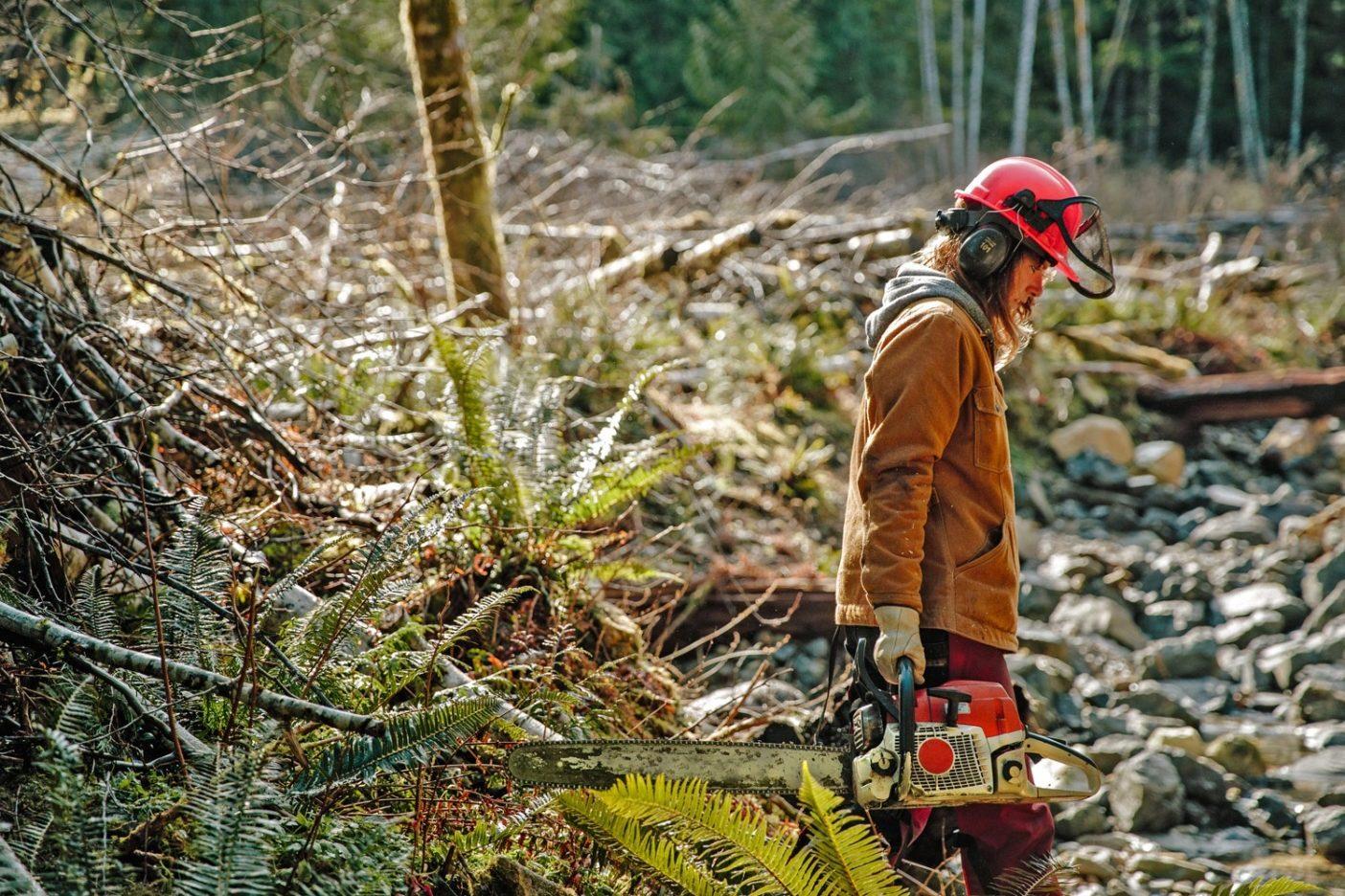 バンクーバー島のバックカントリーで仕事をするジェシカ・ハッチンソン。この島の水域の大部分は皆伐が招いた大きなダメージを抱えている。ハッチンソンとスタッフは修復のプロセスを早めることのできるプロジェクトを企画する。Photo: Jeremy Koreski