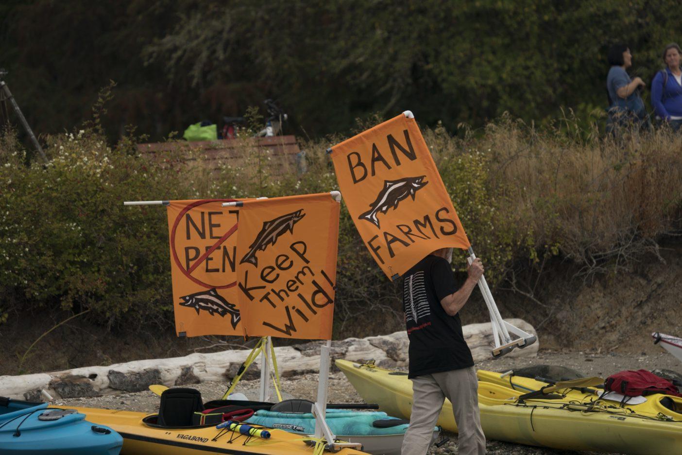2017年9月16日、カヤック、カヌー、フィッシングボート、パドルボード、ローボート、セールボート、クルーザー、そして1頭の巨大なオルカ風船がワシントン州のベインブリッジ島に集結し、ピュージェット湾でのアトランティックサーモンの囲い網養殖に反対する「私たちの湾、私たちのサーモン」キャンペーンを行った。写真:ベン・ムーン