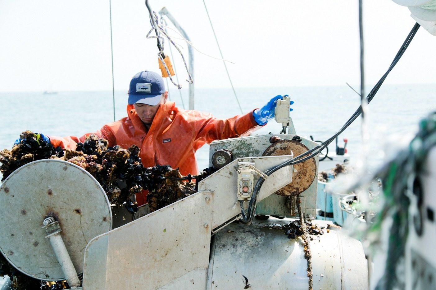 海に仕掛けた養殖いかだからカキを一気に引き揚げる。写真:五十嵐 一晴