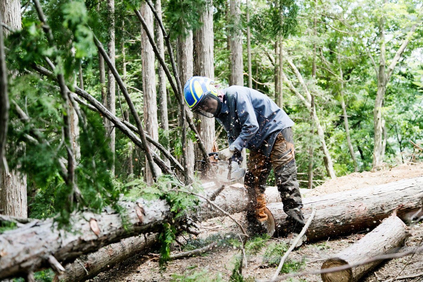 作業道づくりで支障となる木はチェンソーを使って伐採する。伐採した木は、山から搬出しておもちゃや小物に加工する。作業道の補強に使うこともある。写真:五十嵐 一晴