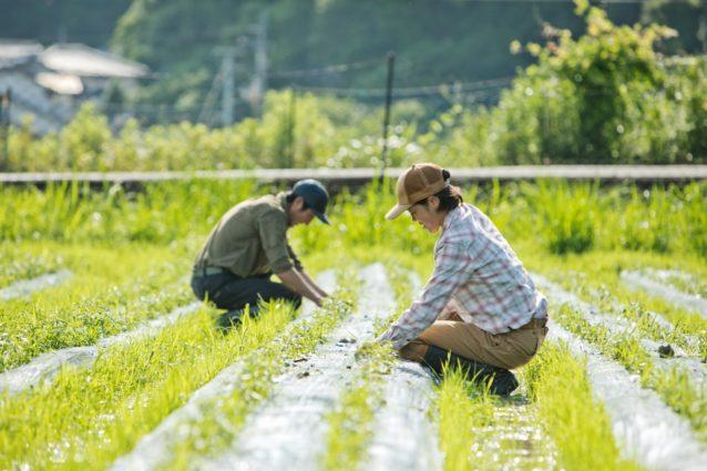 ホーリーバジルの畑で草取りを行う。抜いても抜いても生えてくる雑草、体力勝負の作業だ。写真:五十嵐 一晴