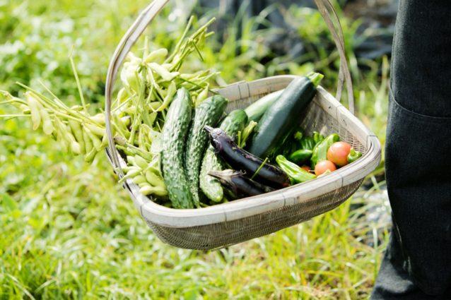 友人が訪れると手塩にかけた作物でもてなす。今晩は夏野菜満載の食卓になりそうだ。写真:五十嵐 一晴
