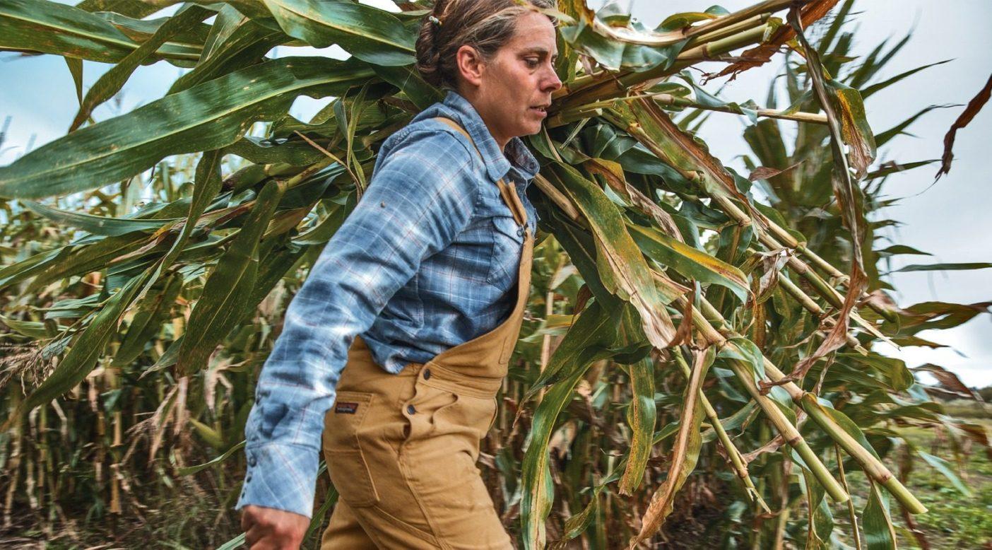 ボーダービュー・リサーチ・ファームで、手でともろこしを収穫するヘザー・ダービー博士。バーモント州オルバーグ。Photo: Colin McCarthy