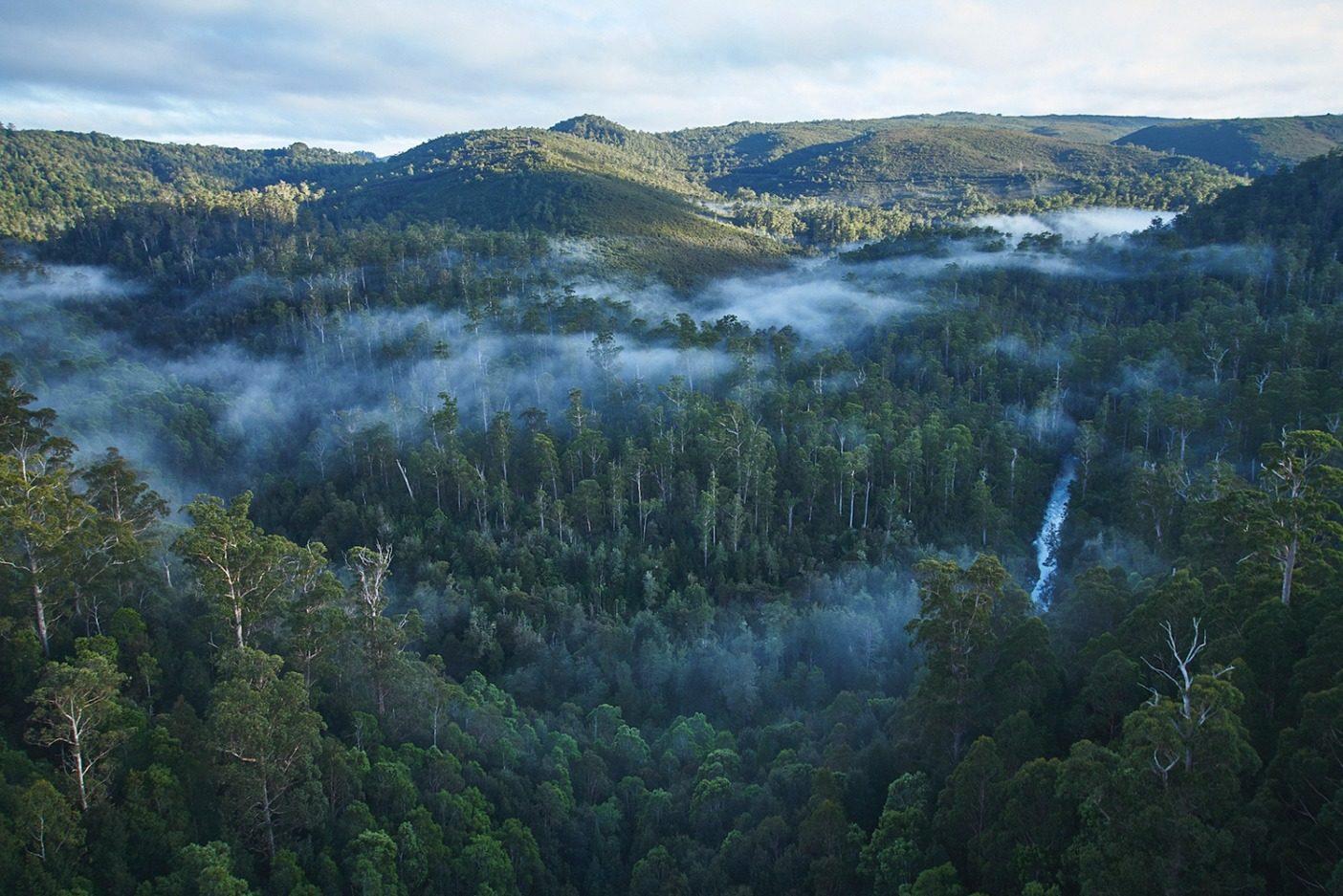 タカイナ/ターカイン地域は世界でも最も手付かずのゴンドワナ多雨林のある場所であり、南半球でアボリジニの考古遺産が最も密集している地域のひとつだ。Photo: Mikey Schaefer