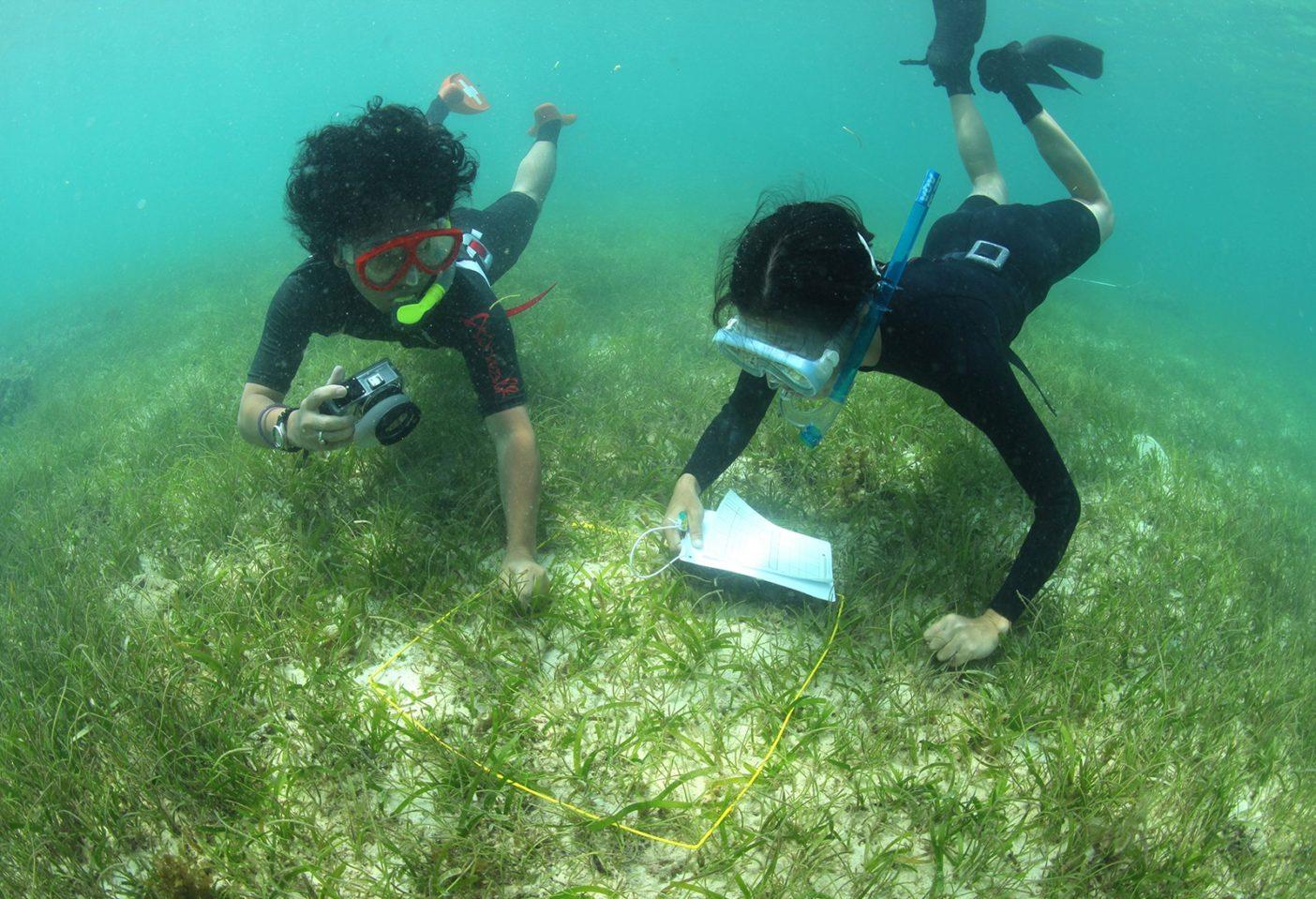 日本自然保護協会が市民参加で実施してきた辺野古の海草藻場の調査「ジャングサウオッチ」のようす。