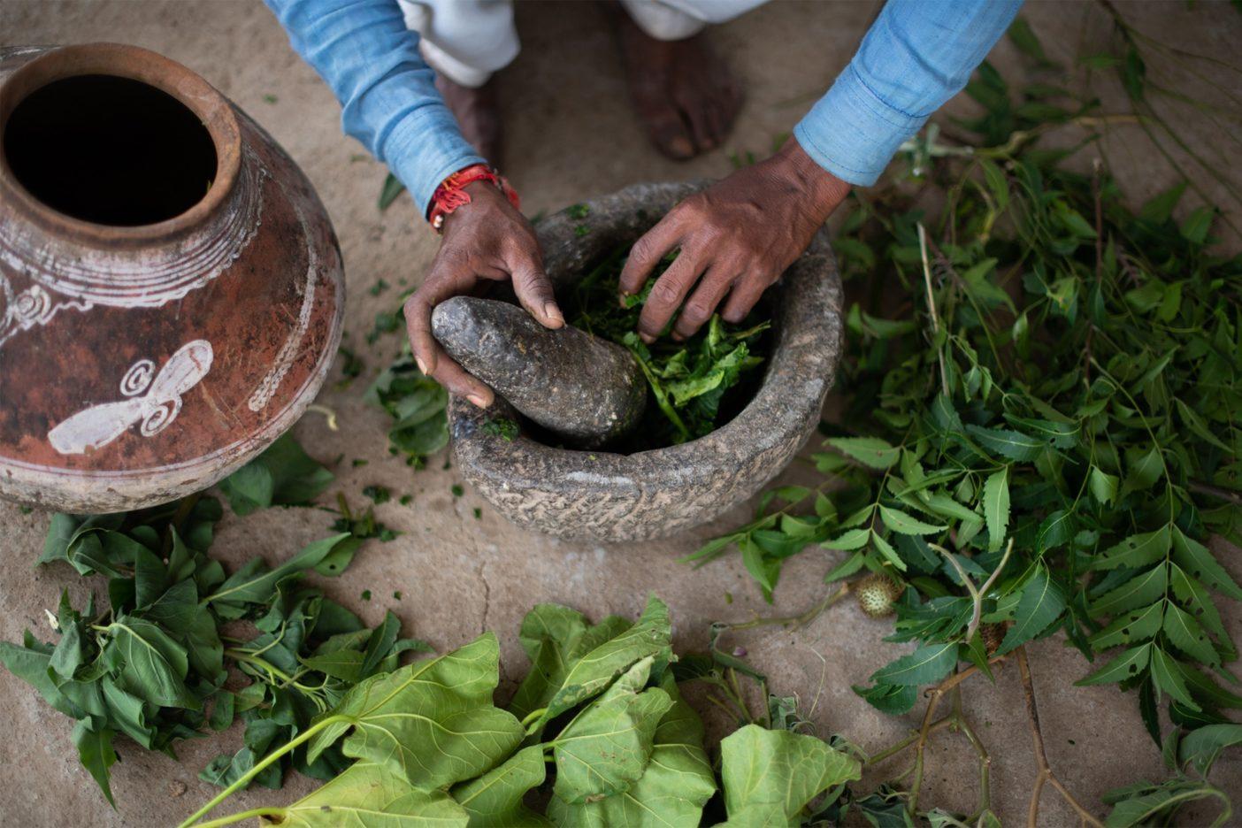 5種類の異なる植物の葉をすり潰して作るこの自然の殺虫剤は、土釜で1週間寝かせてから半分の量まで煮詰められ、それから水と混ぜて畑に散布される。Photo:Hashim Badani