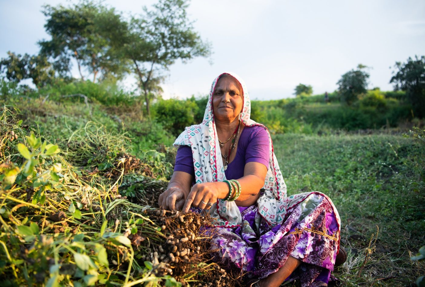 インドの畑で採れたての落花生の仕分けをするハンシング・ダッタ。この畑では10月から11月にかけて、トウモロコシ、トマト、唐辛子、落花生などが間作される。Photo:Hashim Badani
