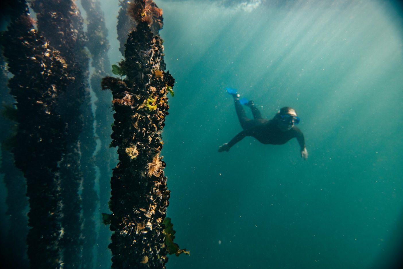 ガリシアの冷たい水で育つムール貝のあいだを潜水中のケイト・ラザフォード。スペイン