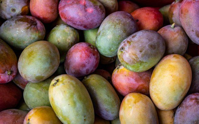 加工施設で洗浄される、リジェネラティブ・オーガニック認証を目指してアグロフォレストリーを実践する農園で収穫された新鮮なマンゴー。ニカラグア Photo:Amy Kumler