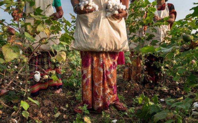 インドにあるこの農場は、 私たちのウェアの素材となるコットンの 栽培方法を変えるための検証の一環。 大地、そしてそれを利用する人間と動物 を尊重し、最終的には気候変動の阻止 に役立つ健全な土壌を育むことがその狙いである。Photo:Avani Rai