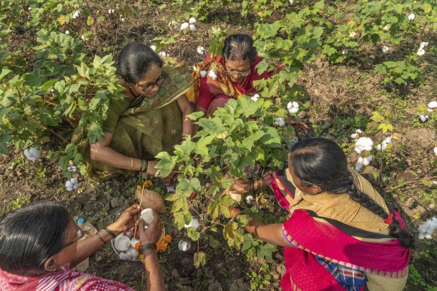 リジェネラティブ・オーガニック認証・パイロットの一端として作物 を育てる150件以上のインドの農場 のひとつで、綿の木を点検する女性 たち。この認証を通して、農家は 生産するコットンに対する賞与を 受けている。Photo:Avani Rai