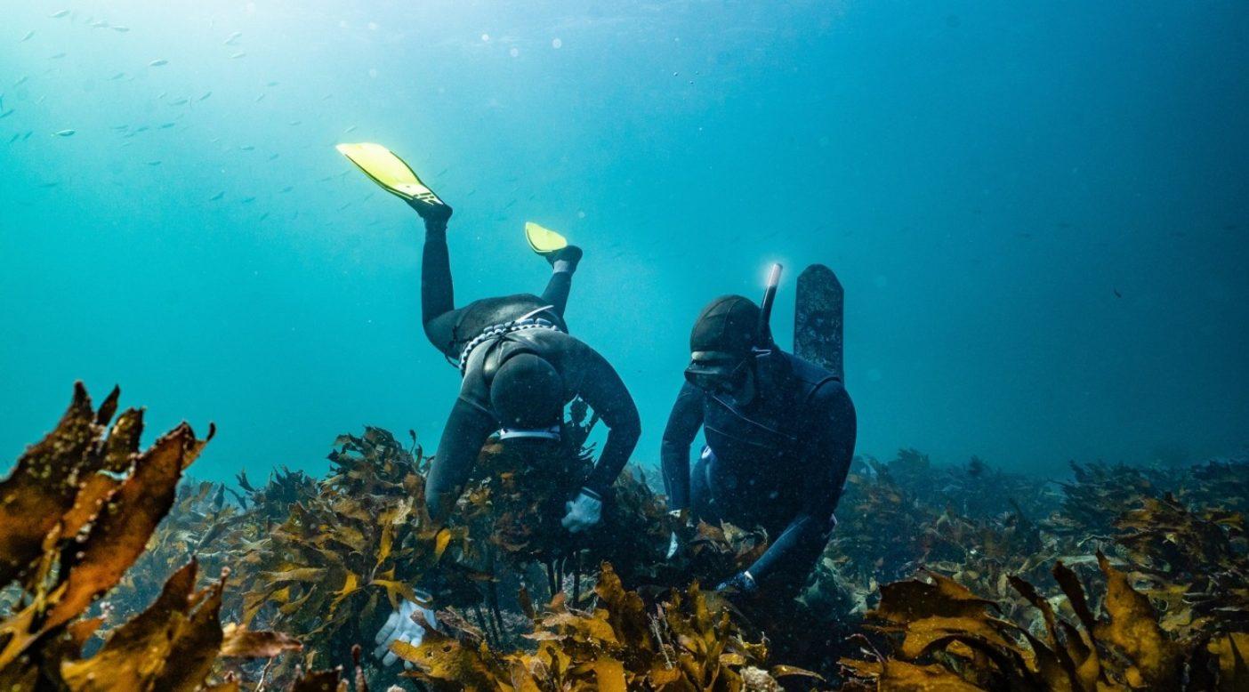 海藻の根元を縫い進みながら サザエを見つける方法を、キミに正確に教えるヘニョ。Photo:Nicole Gormley