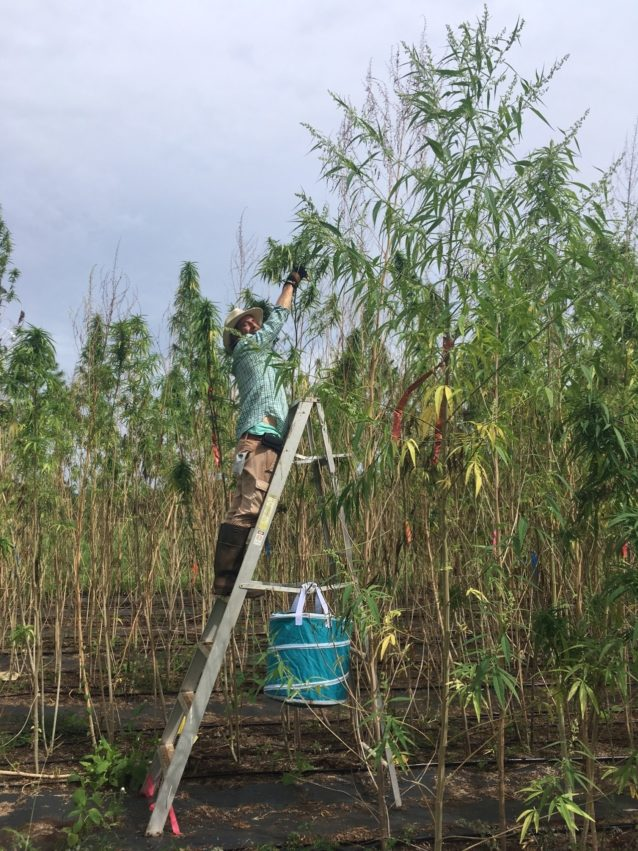 再生式ヘンプ農法の最終目標は故郷である地球を救うこと。ニューメキシコ州ファンキー・ビュート・ランチにて。photo:Doug Fine提供