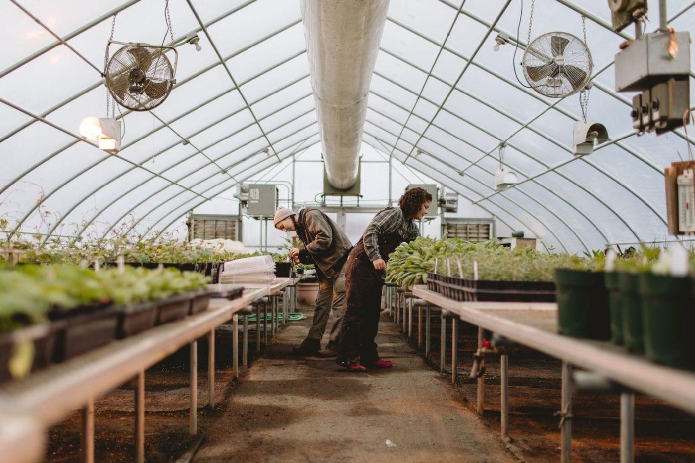 いま散髪してもらえるのは植物だけかもしれない。ときとして葉の成長を促進するための「散髪」が必要となる200種類以上の認証オーガニック植物の準備をする〈ロデール〉のインターンたち。photo:Johnie Gall