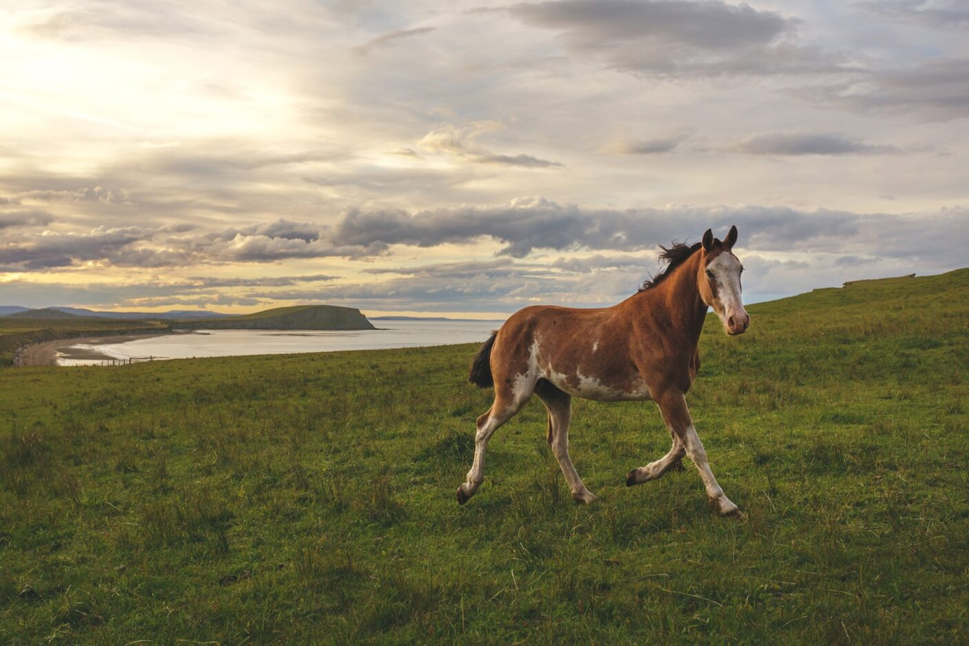 ティエラ・デル・フエゴでは馬は在来種ではないものの、 いまでは島の野生動物の一員として解け込んでいる。写真 : ロドリゴ・マンズ