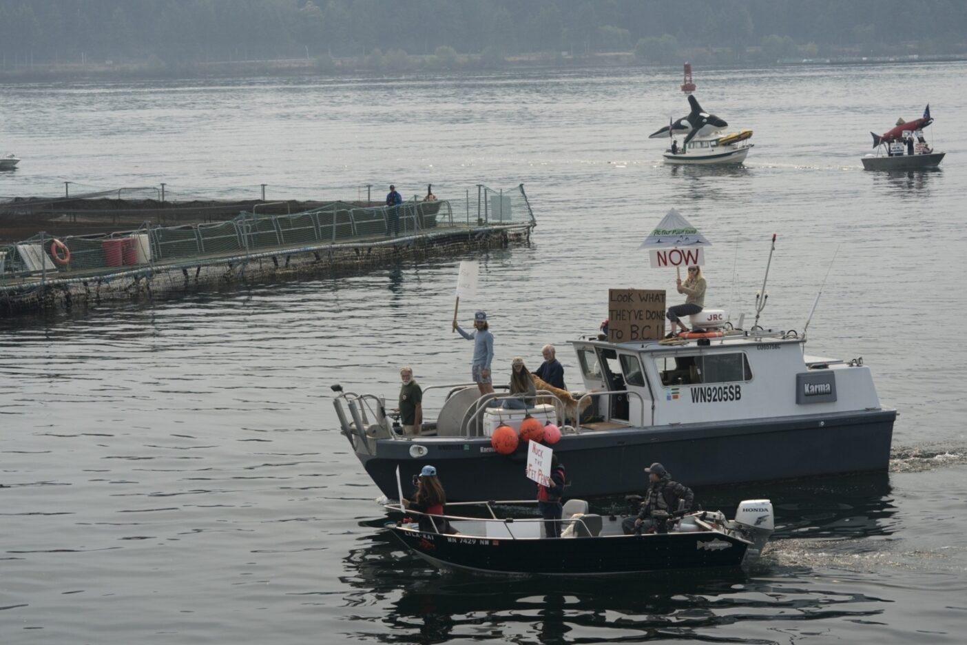 クック・アグリカルチャー社のアトランティックサーモンの囲い網がピュージェット湾の水に放流した疾病、寄生虫と汚染に抗議するため、漁業船やカヤックで乗り出した市民たち。Photo:Ben Moon