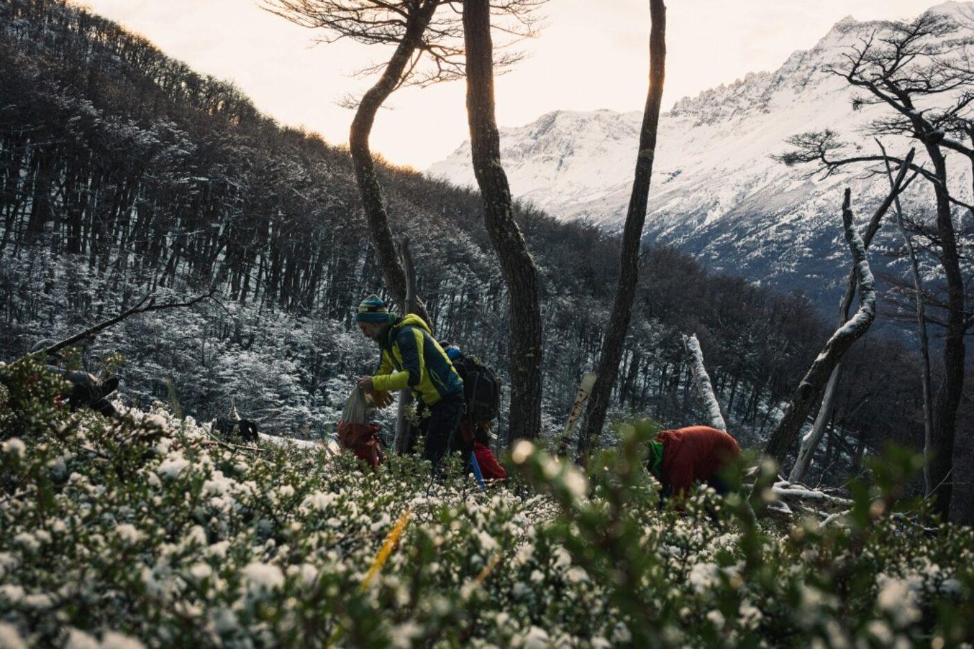 チャルテンでは、冬の最適期を除き、雪線にたどり着くまでにまず森林限界まで登らなければならない。地元民のフェデリコは、まだらに雪の付いたヒースの藪を進む。アルゼンチン、サンタクルス州 写真:マシュー・タフツ