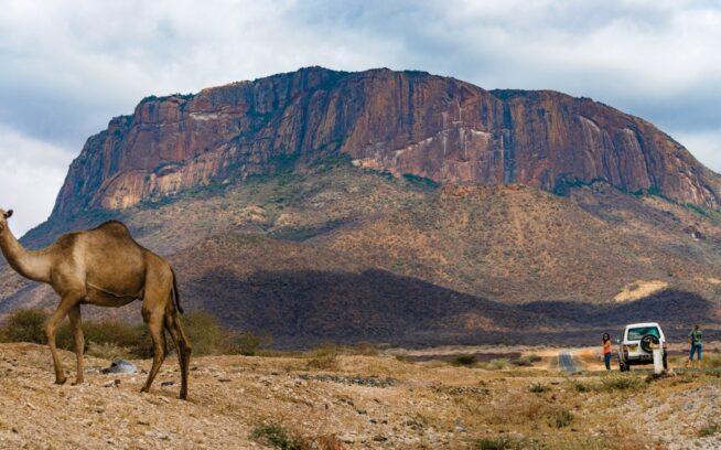 遠くオロロクエ山を背景にしてラクダが横切っていく。ケニア Photo:Eric Bissell