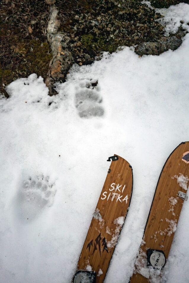 「ソーツ」(ヒグマ)はシトカに春の訪れを知らせるが、できれば出会うのは足跡だけにしたい。写真:リー・ハウス