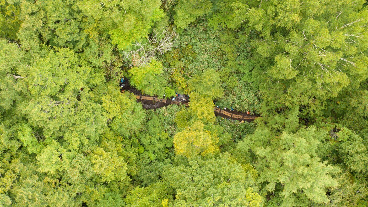 ボランティアとともに完成させた森の中の木道。 写真:下山 展弘