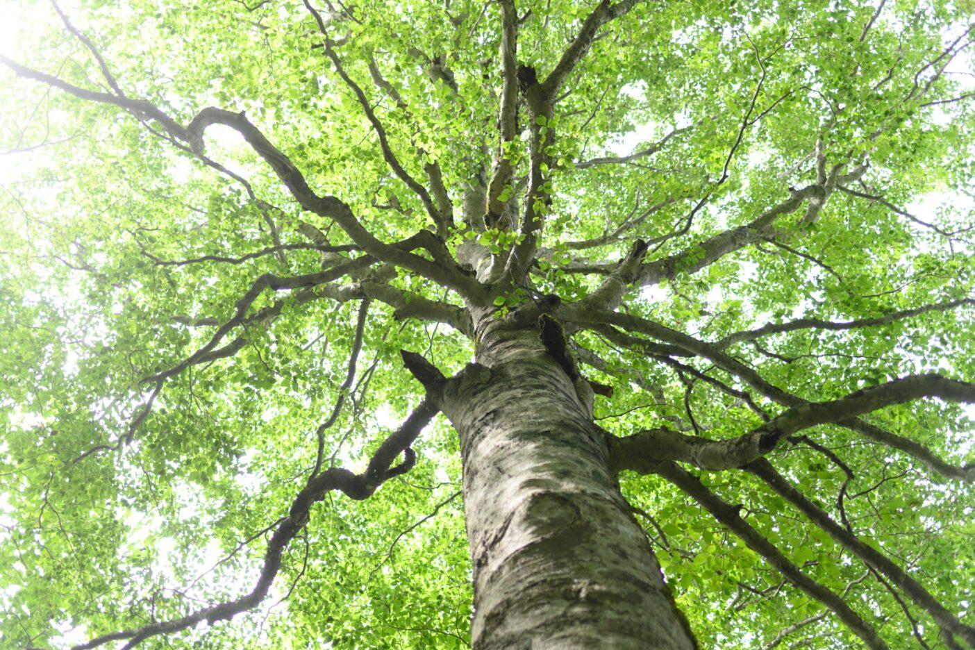愛する山、森、トレイルを未来に残すために僕らがすべきこととは? 写真:下山 展弘