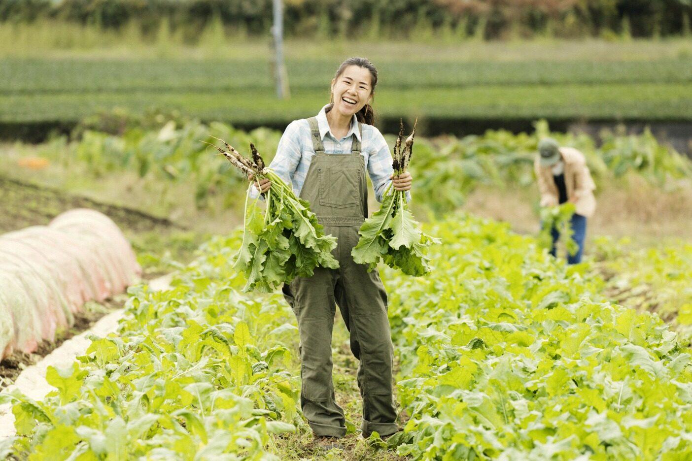 青梅の有機農家、「Ome Farm」の畑で伝統野菜であるシナガワカブを収穫する。シナガワカブは江戸期から始まる東京の野菜文化を継承する在来種だ。写真 : 五十嵐 一晴