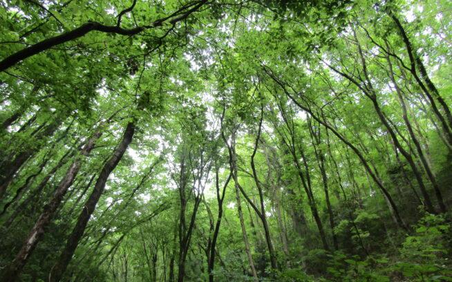 2020年5月、阿須山中の新緑。未来永劫、この瞬間が幾度となく繰りかえしつづいていきますように。写真:長谷川 順子