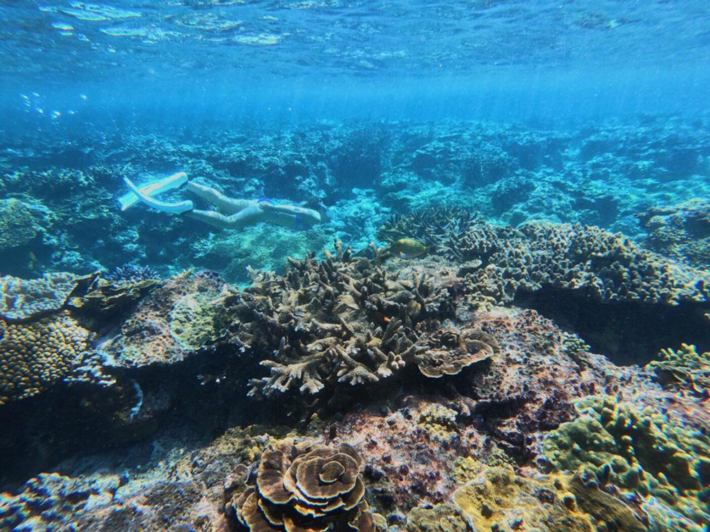 沖縄県宮古島の海に潜るために1か月ほど滞在。「昔はもっとサンゴが元気で何倍も綺麗だった」とよく聞かされた。写真:鈴木 弥也子