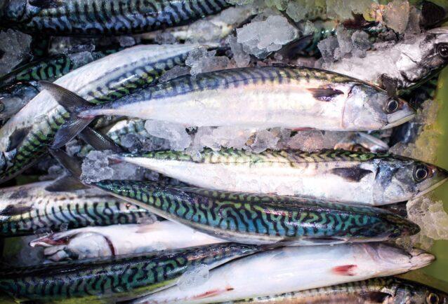 市場に並ぶ地元の漁船から水揚げしたばかりのタイセイヨウサバ。Photo: Amy Kumler