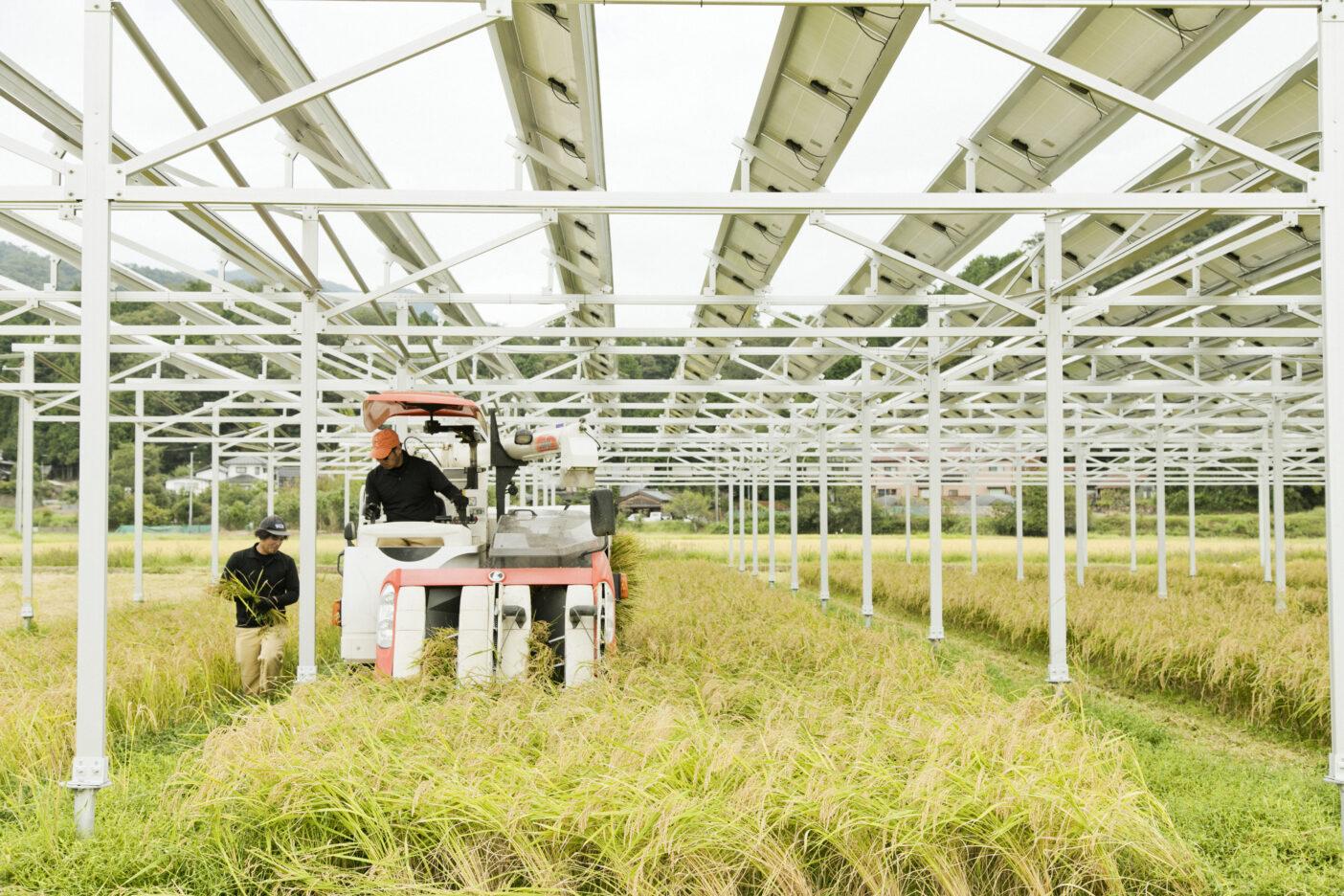 ソーラーパネルの下、コンバインを器用に操って収穫作業を行う。写真:五十嵐 一晴