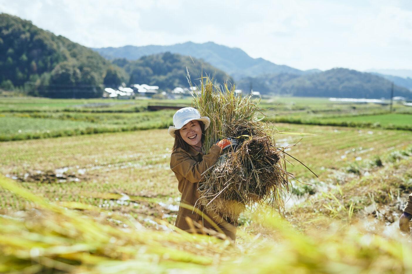 こだわりの黒米は天日干しを行うため、バインダーで刈り集める。写真:飯坂 大