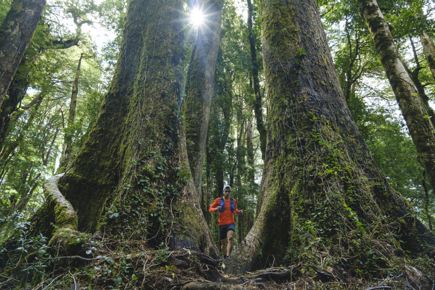 太古の木々の間を抜ける。Photo: Rodrigo Manns