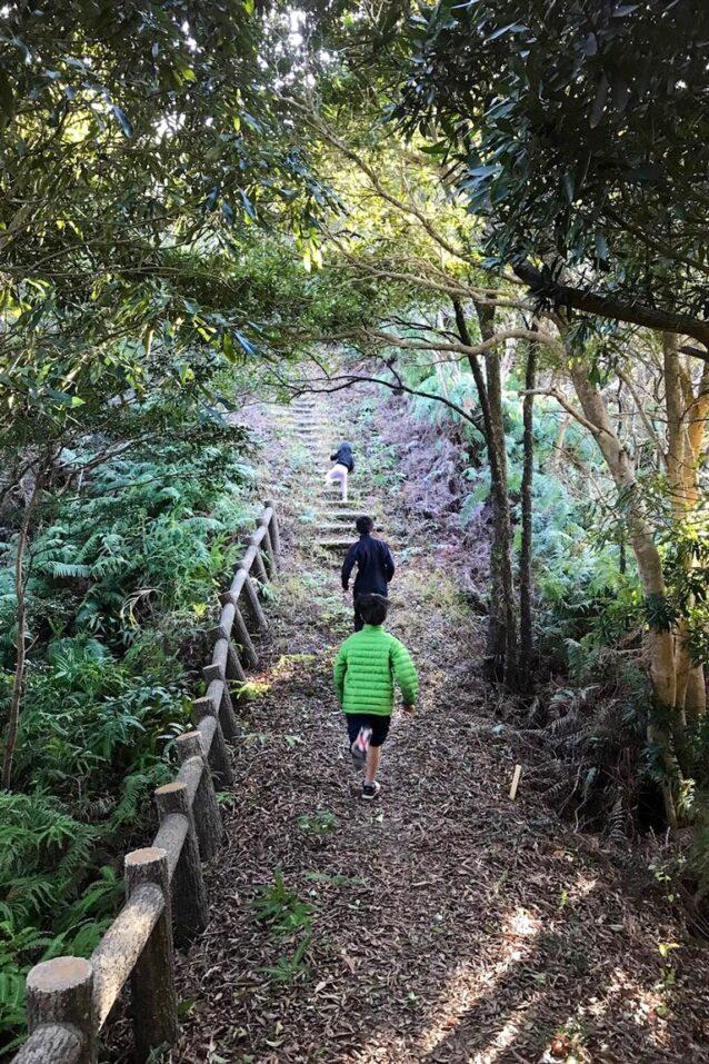 裏山を走りに。